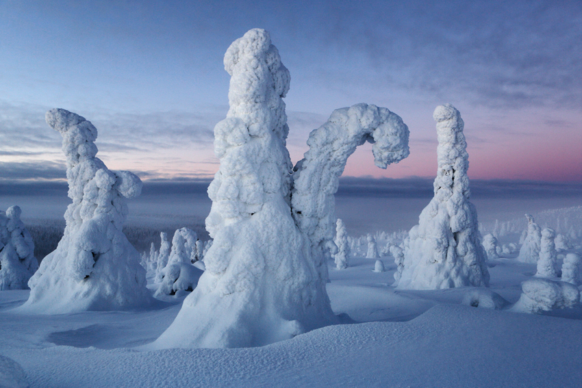 Congelados, Riisitunturi, Finlandia, Febrero 2013. - La taiga - Isabel Díez . Bosque Boreal . Finlandia