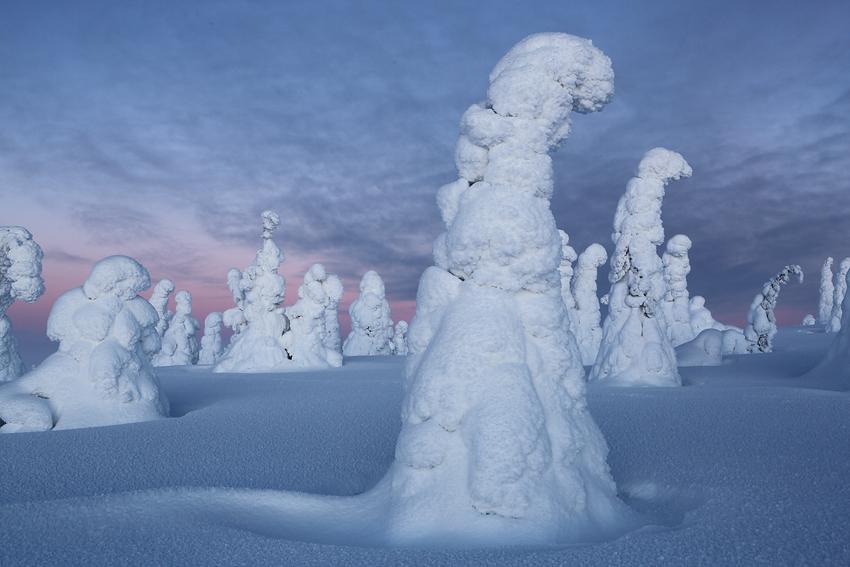 Riisitunturi, Finlandia, Febrero 2013. - La taiga - Isabel Díez . Bosque Boreal . Finlandia