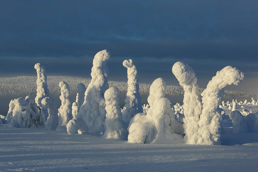 La taiga, Riisitunturi, Finlandia, Febrero 2013. - La taiga - Isabel Díez . Bosque Boreal . Finlandia