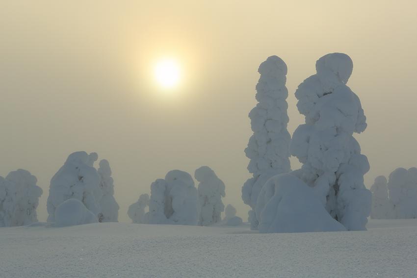 Niebla dorada I, Riisitunturi, Finlandia, Febrero 2013. - La taiga - Isabel Díez . Bosque Boreal . Finlandia