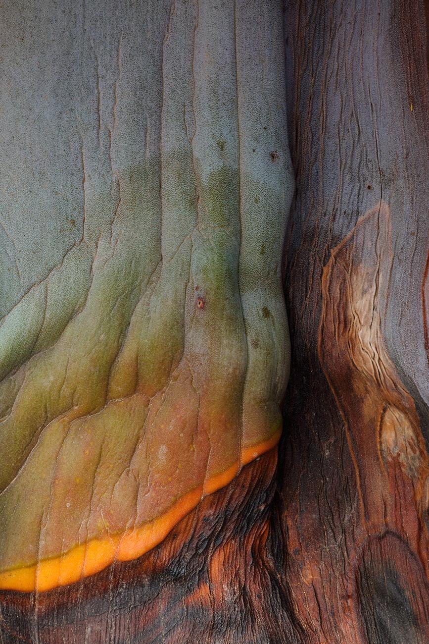 Mors folium I - Isabel Díez, landscape photography