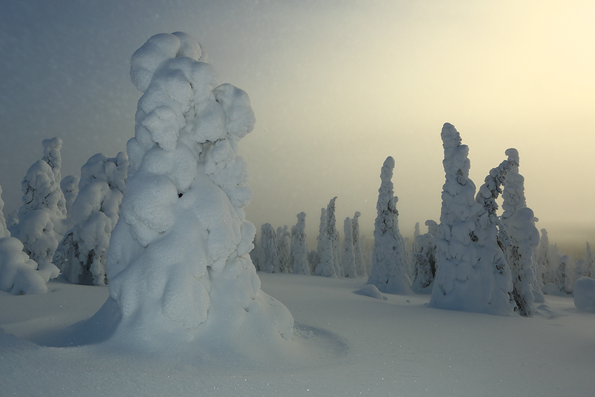 El resplandor, Riisitunturi, Finlandia, Febrero 2013. - La taiga - Isabel Díez . Bosque Boreal . Finlandia