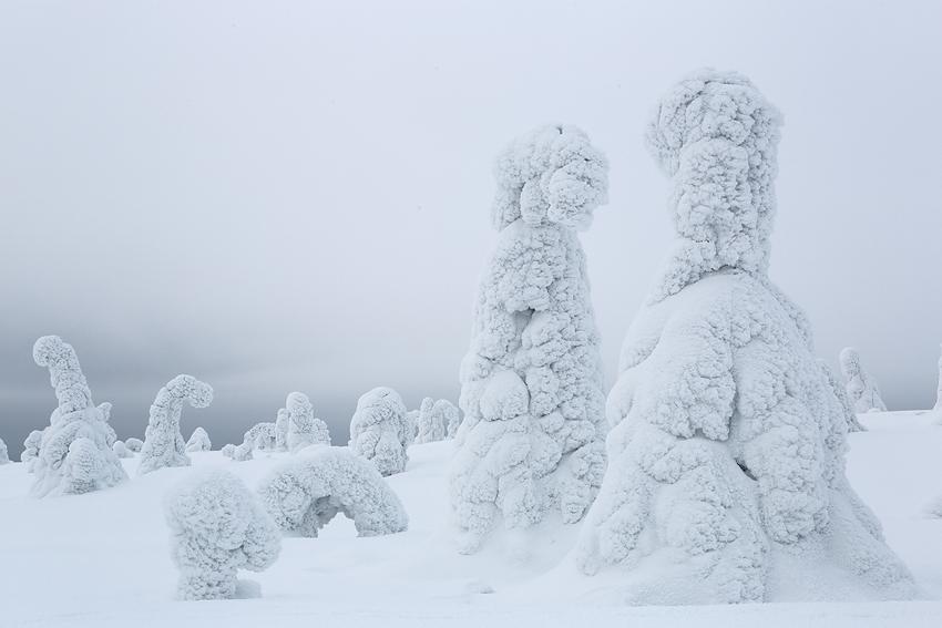 Conversando, Riisitunturi, Finlandia, Febrero 2013. - La taiga - Isabel Díez . Bosque Boreal . Finlandia