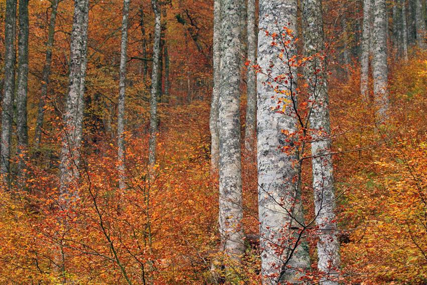 Conversando con el bosque - Isabel Díez, landscape photography