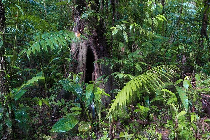 Estación Biológica La Selva, Costa Rica, Febrero 2009. - Objetivo Pura Vida - Isabel Díez, landscape photography