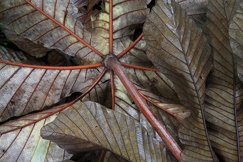 Parque Nacional Volcán Tenorio, Costa Rica, Febrero 2009. - Objetivo Pura Vida - Isabel Díez, landscape photography