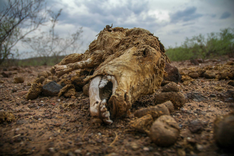 Sequía en Santa Clara Durango - JAIR CABRERA, Photography
