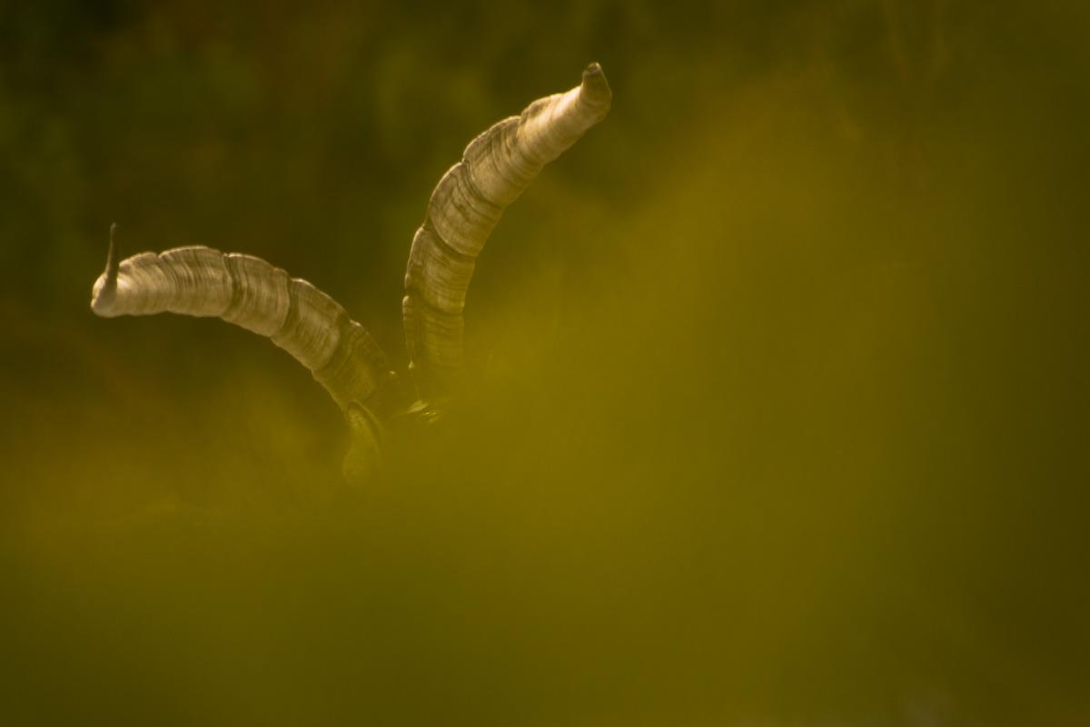 Los guardianes de las montañas - JC Fajardo, Fotografía