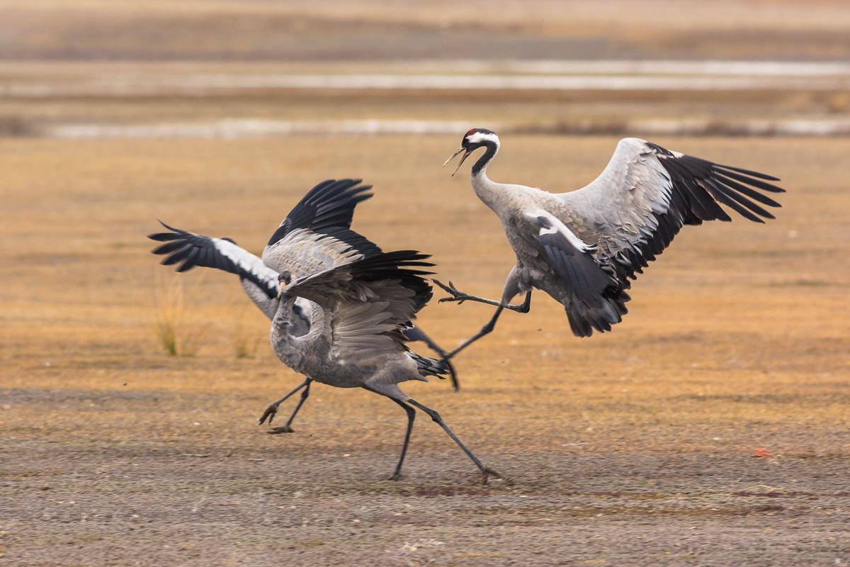 Aves del invierno - Aves del invierno