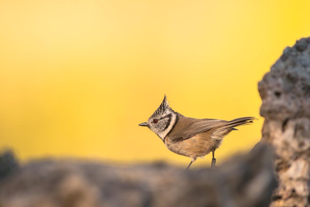 Little birds - Little birds