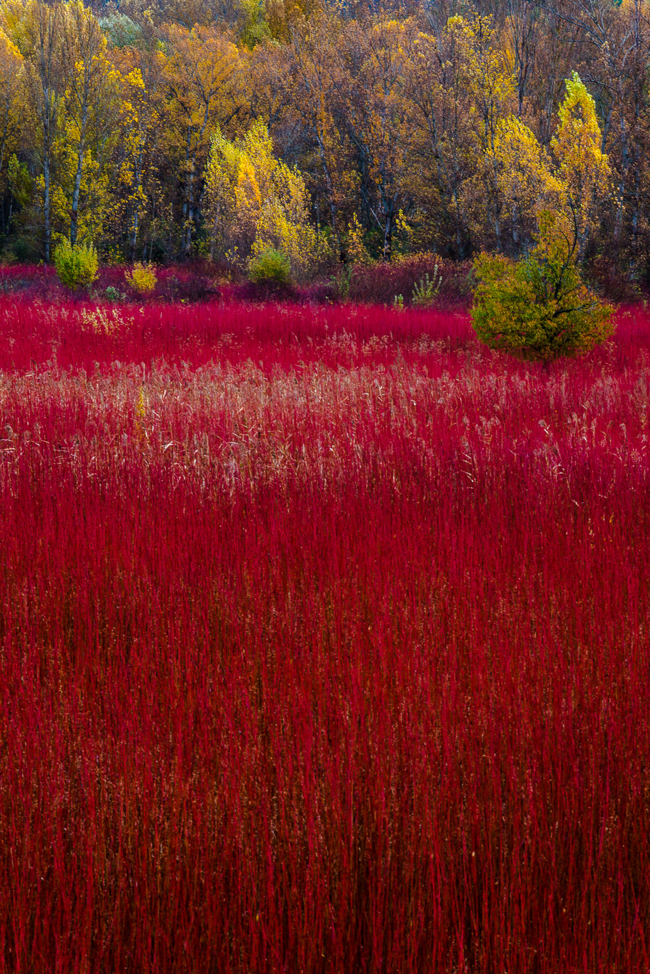 Mar rojo de la Mancha - Mar rojo de la mancha