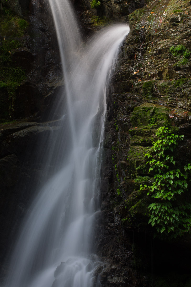 Shikoku - JESUS RODRIGUEZ, FOTOGRAFIA DE NATURALEZA
