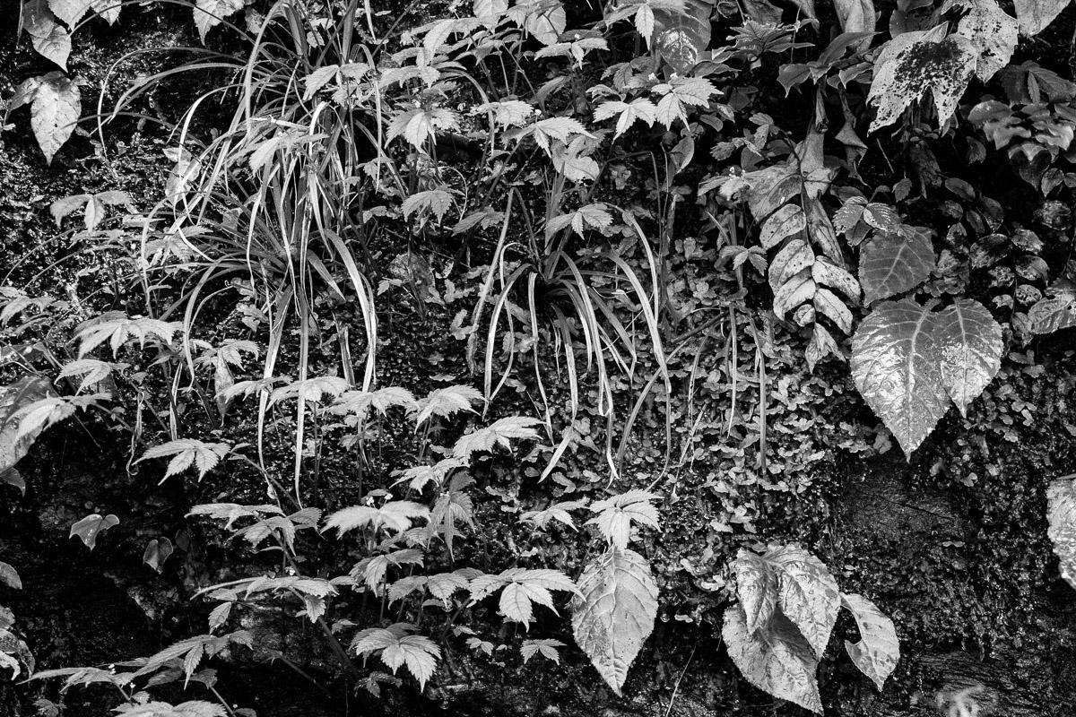 Blanco y Negro - JESUS RODRIGUEZ, FOTOGRAFIA DE NATURALEZA