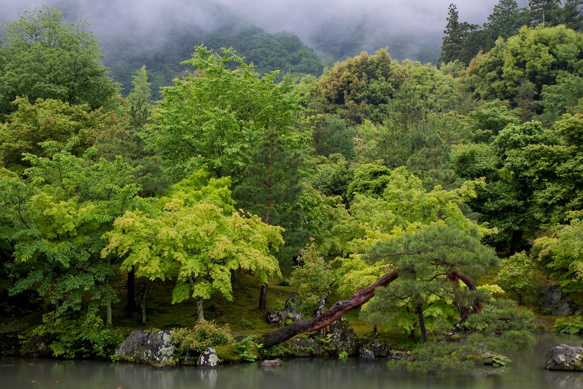 Arashiyama. Kioto - Escenas - JESUS RODRIGUEZ, FOTOGRAFIA DE NATURALEZA