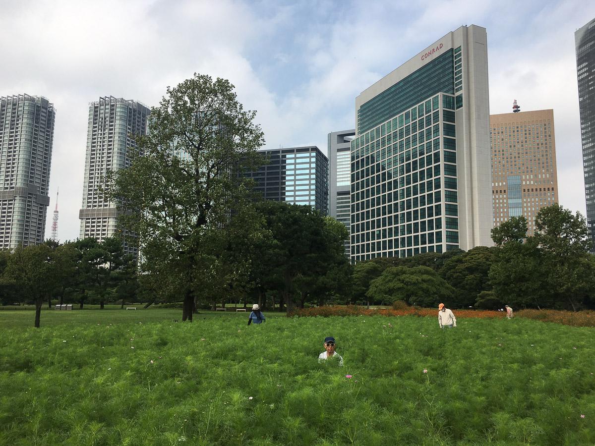 Hamarikyu. Tokio - Escenas - JESUS RODRIGUEZ, photography