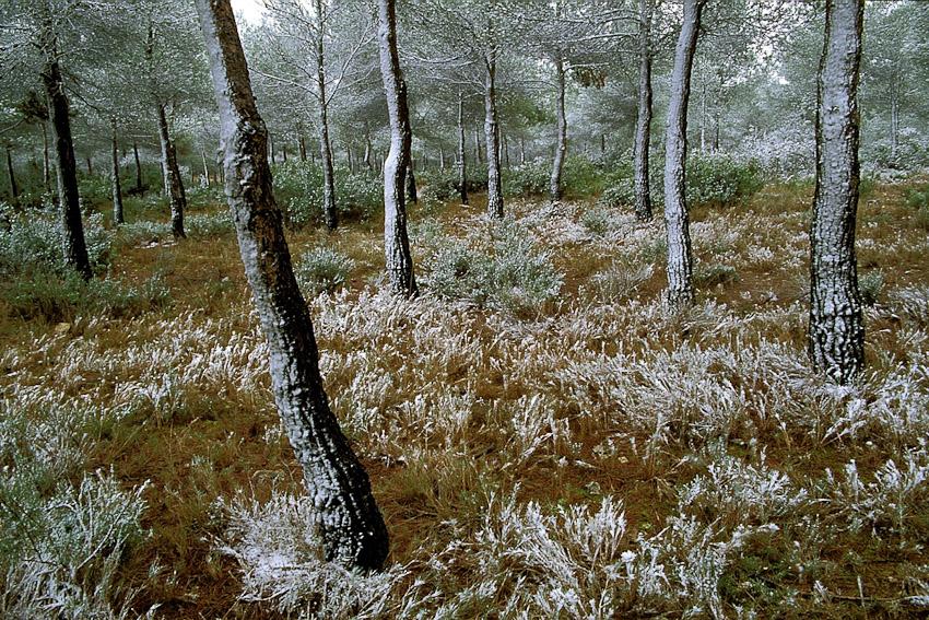 Almansa - un bosque - JESUS RODRIGUEZ, photography