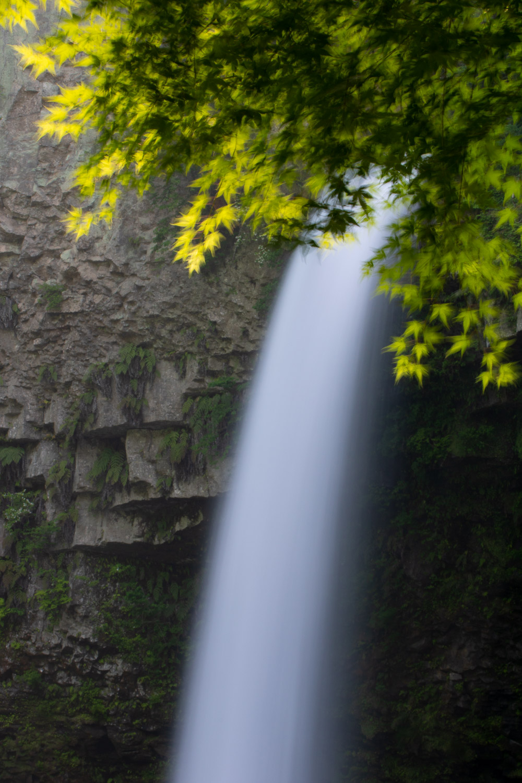 Unoko - Kyushu - JESUS RODRIGUEZ, FOTOGRAFIA DE NATURALEZA