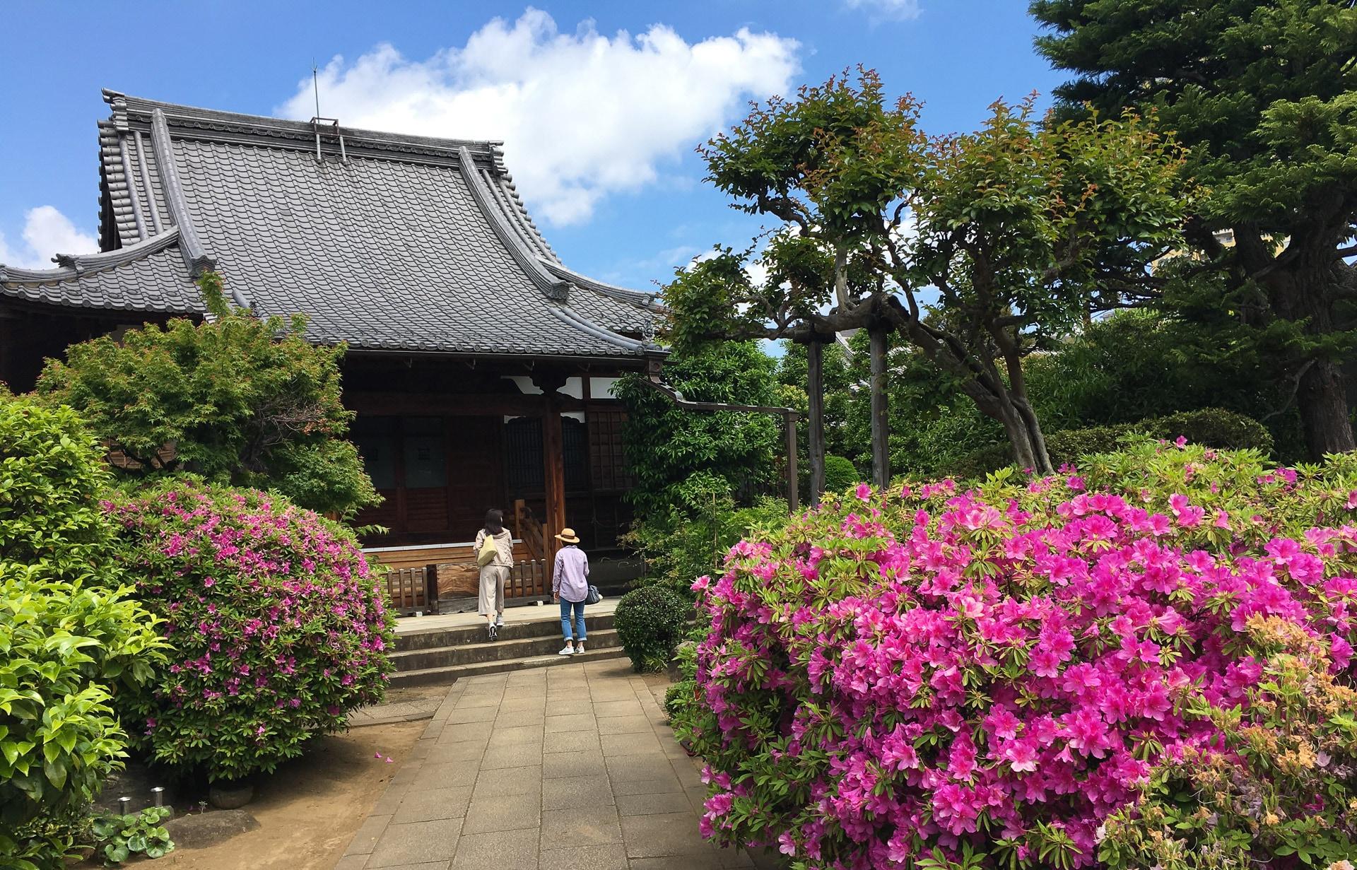 Tokio - Kyushu - JESUS RODRIGUEZ, FOTOGRAFIA DE NATURALEZA