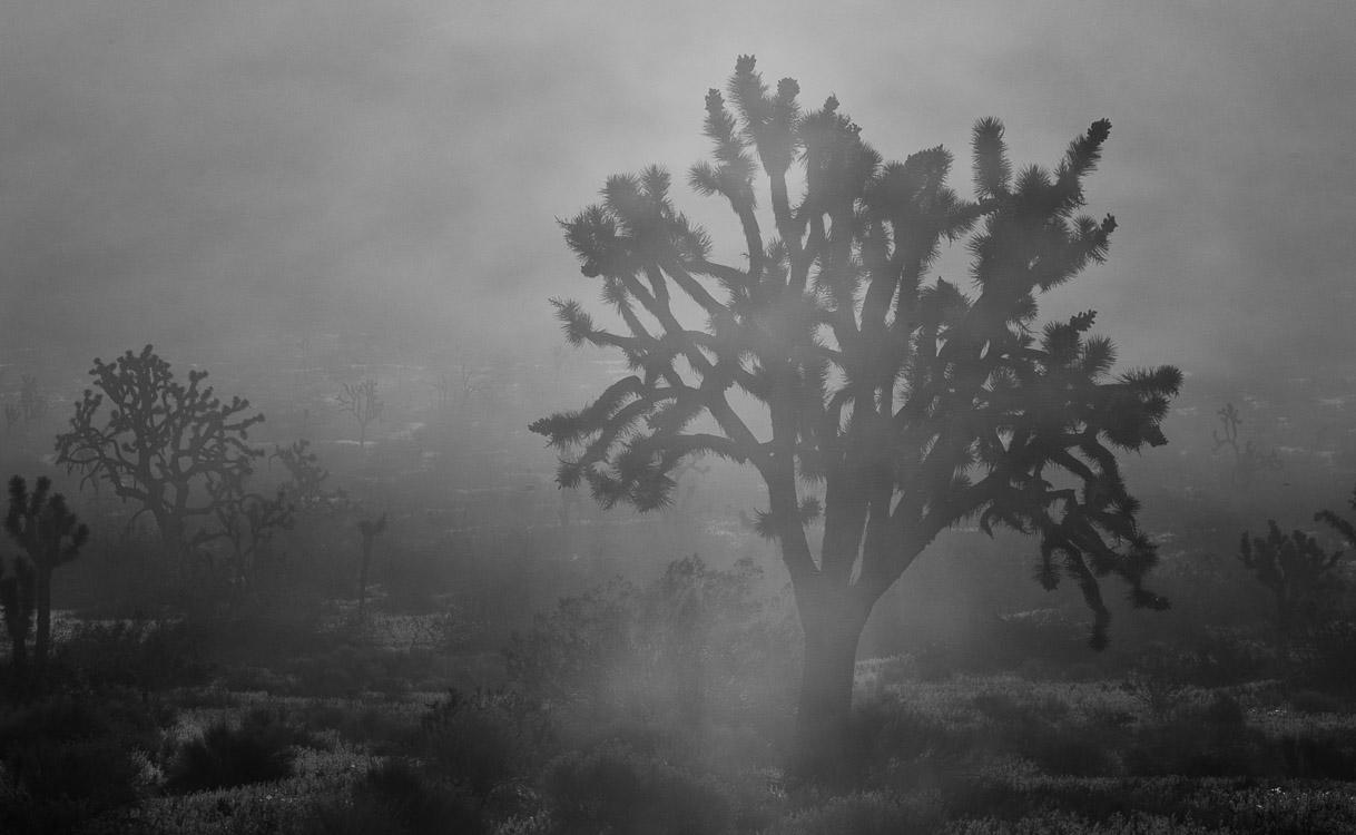 Joshua Tree - en blanco y negro - JESUS RODRIGUEZ, photography