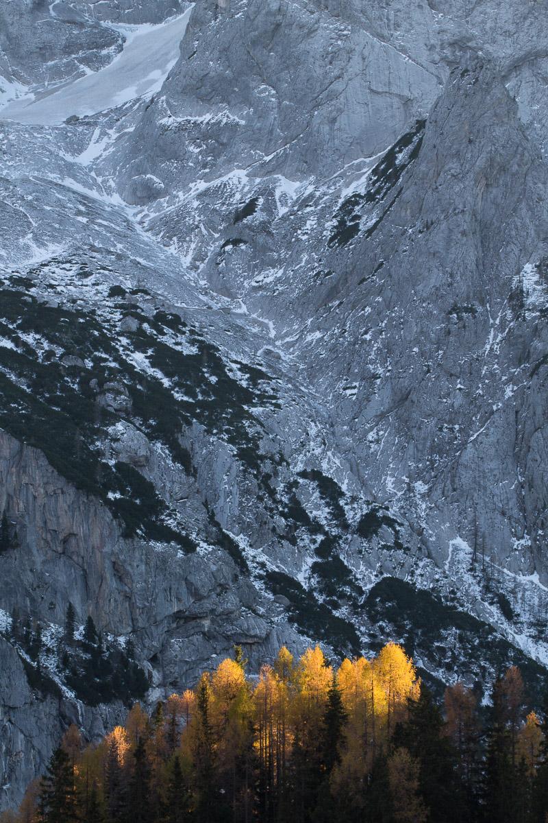 Alerces en otoño. Dolomitas italianos - un bosque - JESUS RODRIGUEZ, photography