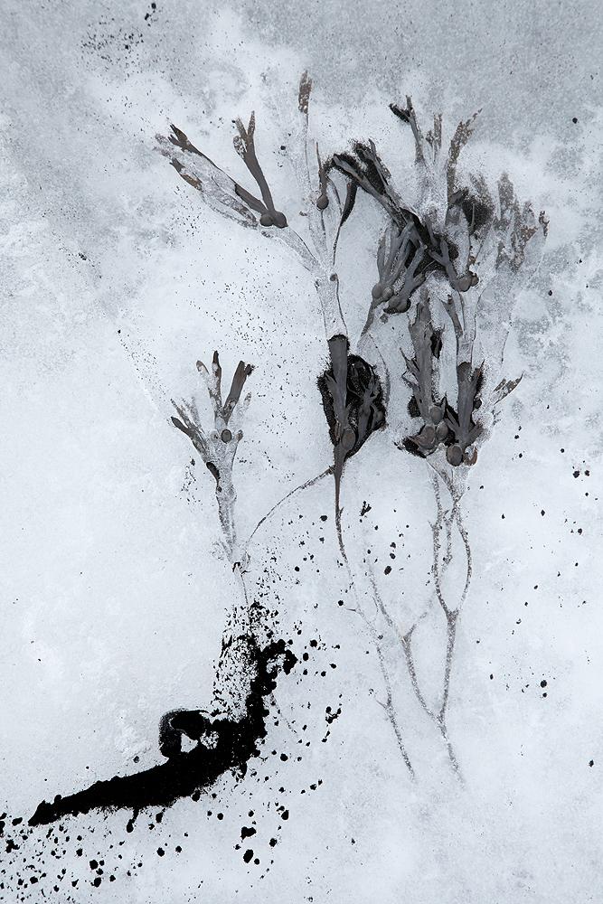 LIENZOS DE HIELO, TINTA DE ARENA -        Juan Tapia      , Art & Nature