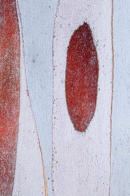 EL COLOR DE SU PIEL - El color de su piel
