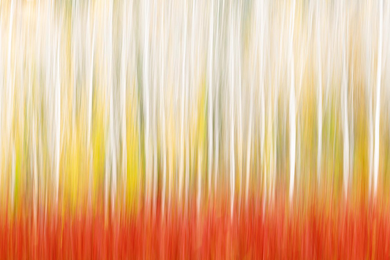 LA LUZ Y EL COLOR EN LOS MIMBRES DE CAÑAMARES -        Juan Tapia      , Art & Nature