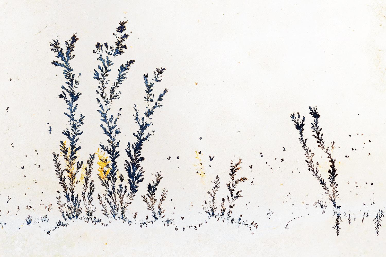 UN BOSQUE IMAGINARIO -        Juan Tapia      , Art & Nature
