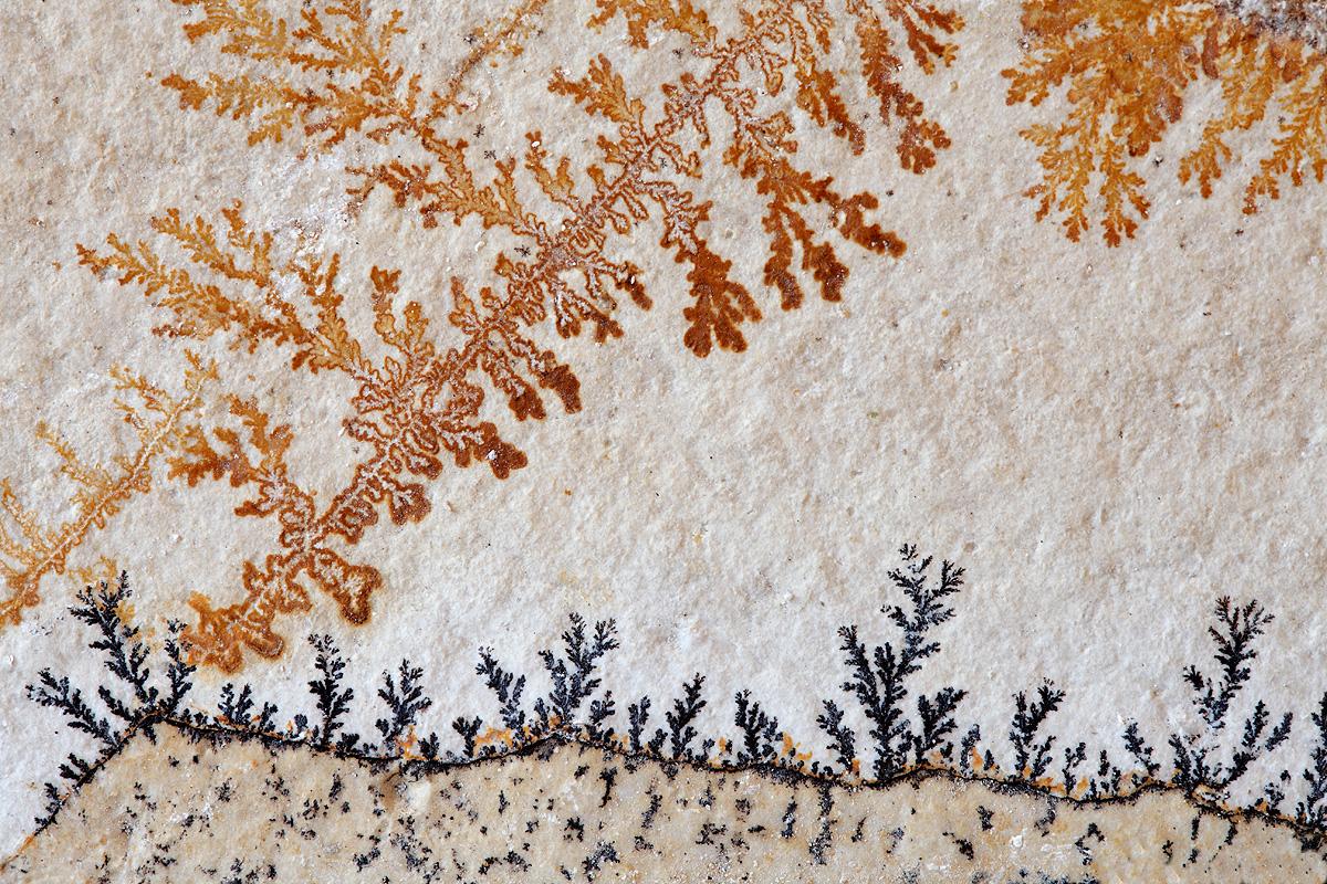 CLOROFILA MINERAL -        Juan Tapia      , Art & Nature