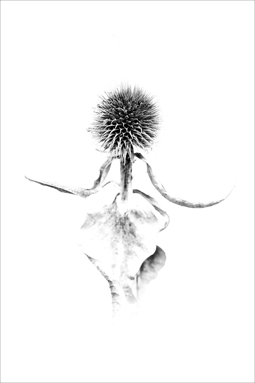 FANTASIA ERES TU -        Juan Tapia      , Art & Nature