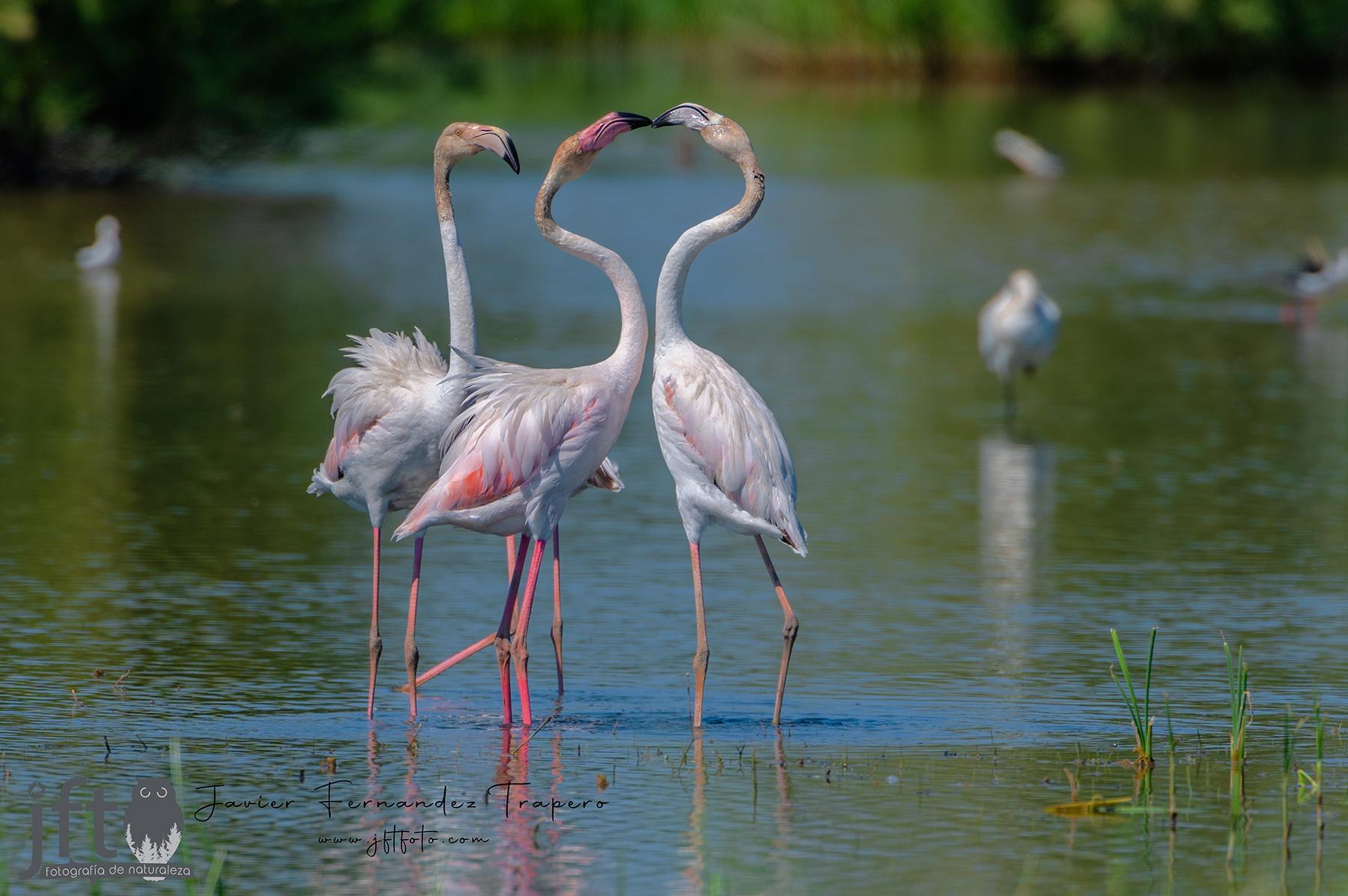 RIOS - Galería de fauna acuáticas