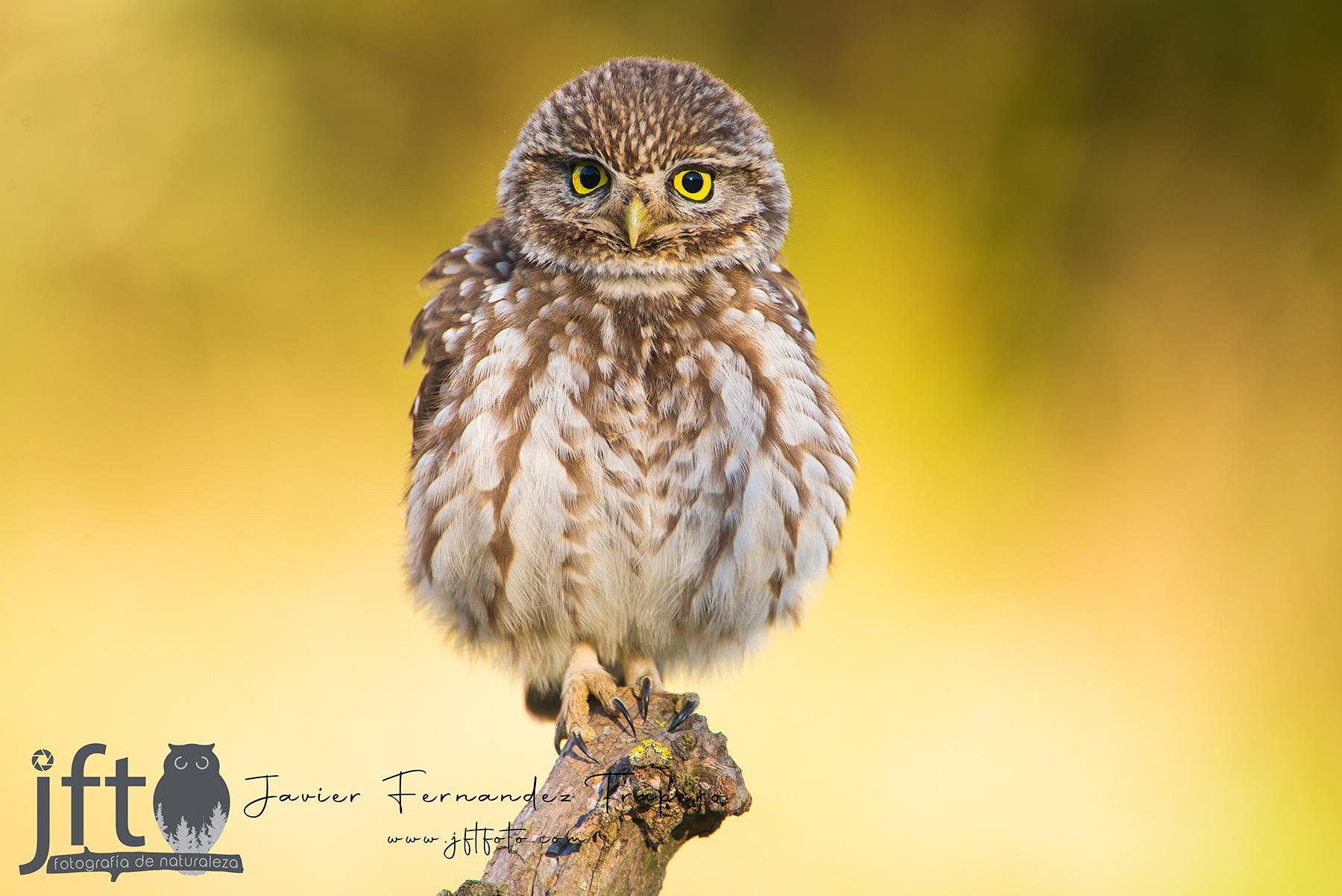 BOSQUES - Galería de fauna forestal y de bosques de España