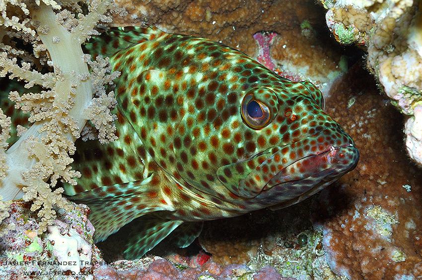 Submarina - Javier Fernandez Trapero, Fotografía de Naturaleza