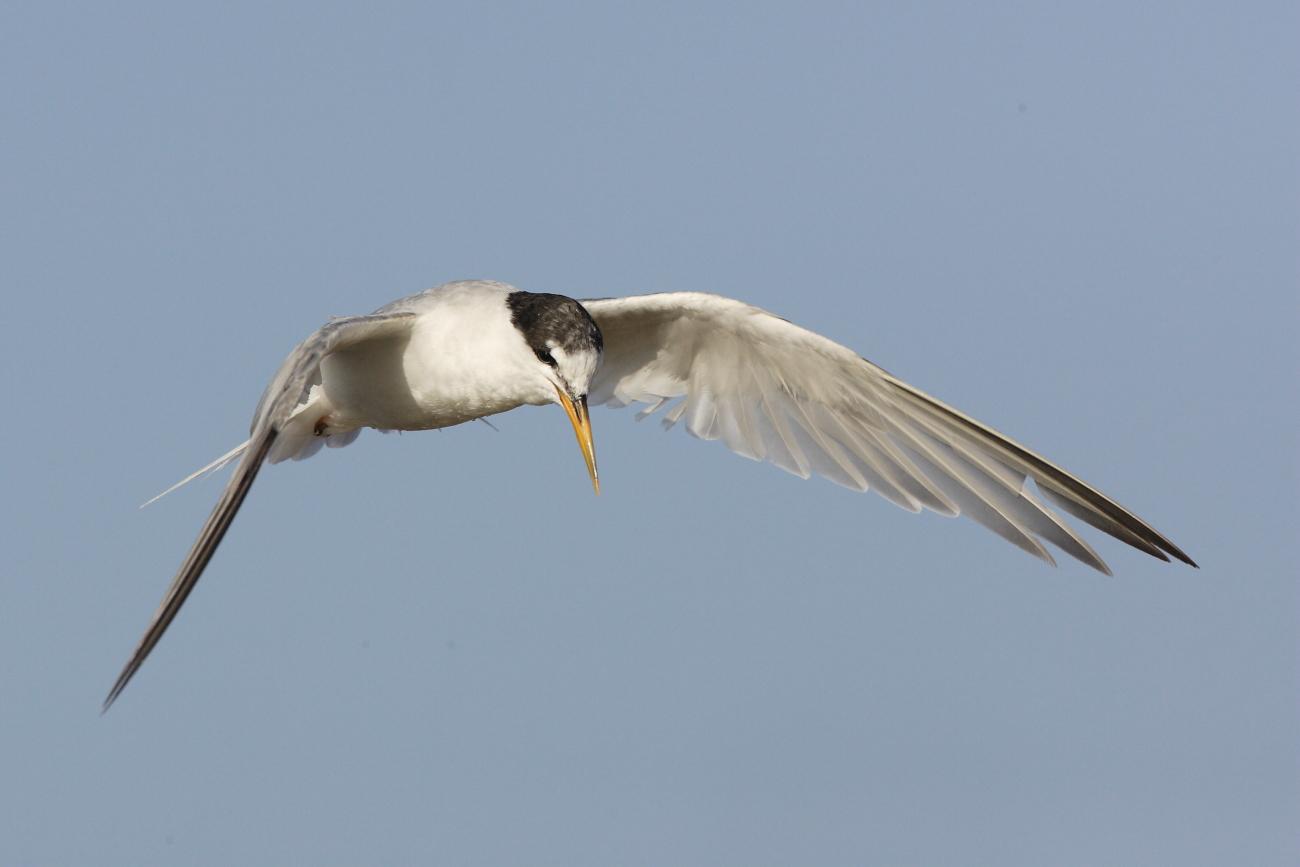 Aves - Images of birds of José Luis Sánchez Almécija