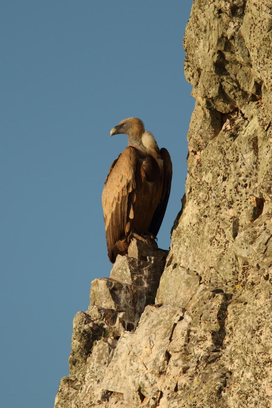 Aves - Imágenes de aves de José Luis Sánchez Almécija