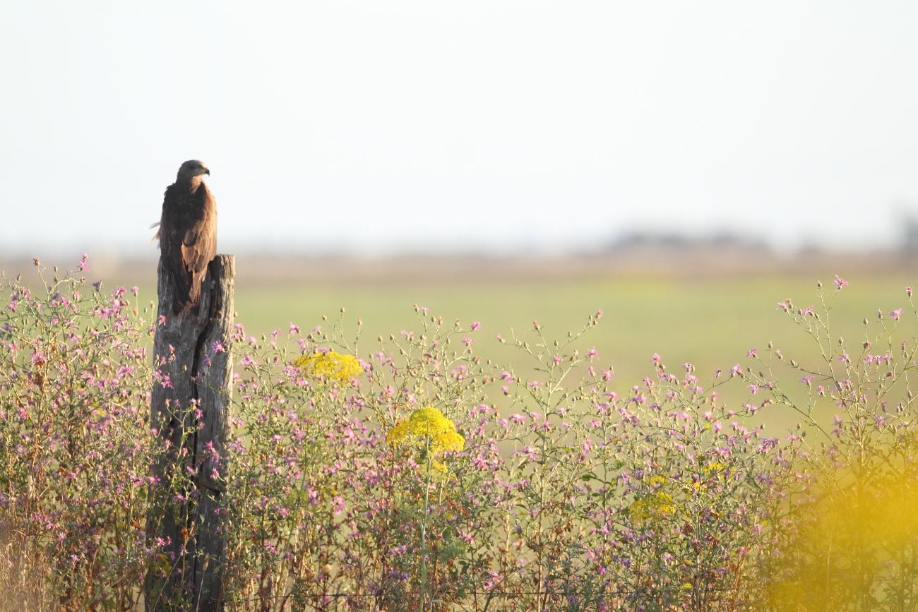 Fauna y Flora en su entorno - Imágenes de Naturaleza de fauna y flora en su entorno de José Luis Sánchez Almécija