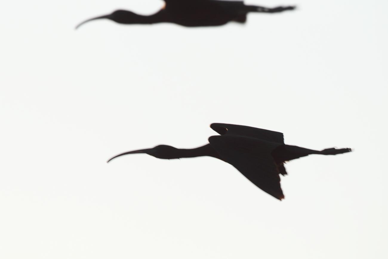 Siluetas - Imágenes de Naturaleza de siluetas de José Luis Sánchez Almécija
