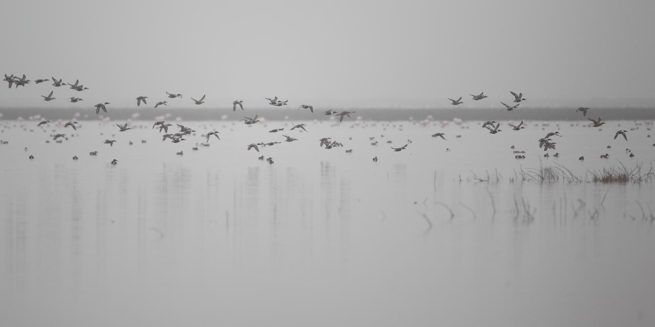 Últimas imágenes - Imágenes de naturaleza del último año de José Luis Sánchez Almécija