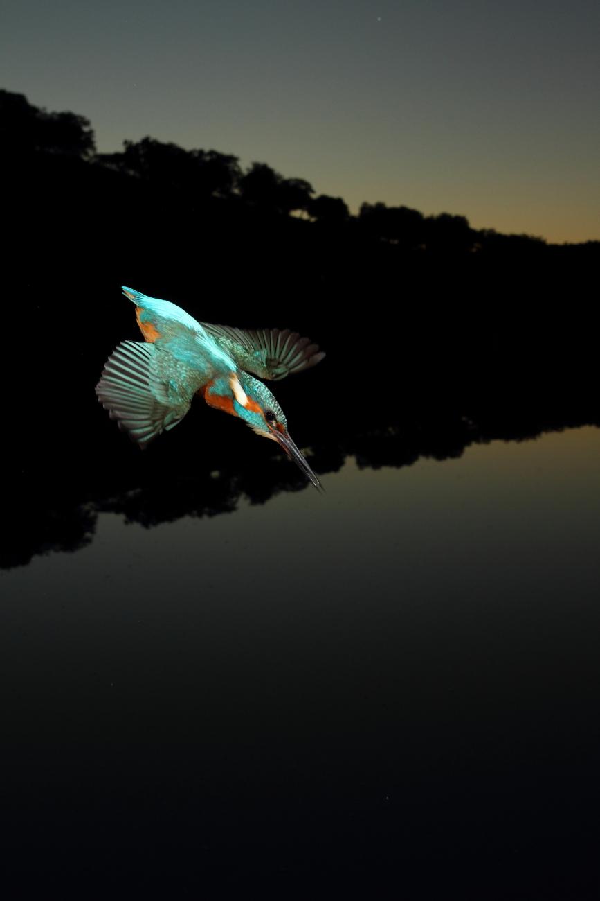 Finalista XXIX Concurso Fotográfico Día Mundial del Medio Ambiente Junta Andalucia 2012 - Fotografías premiadas - Fotografías premiadas de José Luis Sánchez Almécija