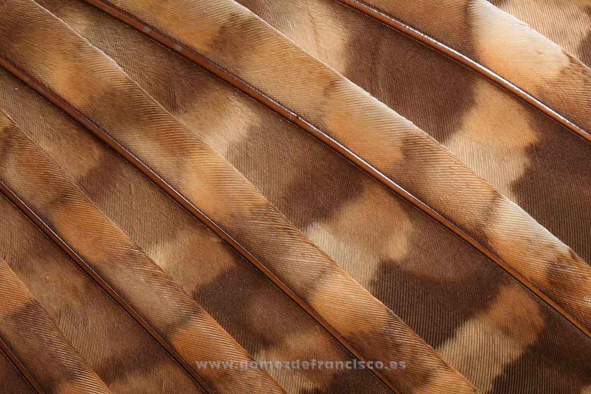 Detalle de ala de cárabo común (Strix aluco) - Atención al detalle - J L Gómez de Francisco. Fotografía de detalles de la naturaleza - Photography of patterns in nature