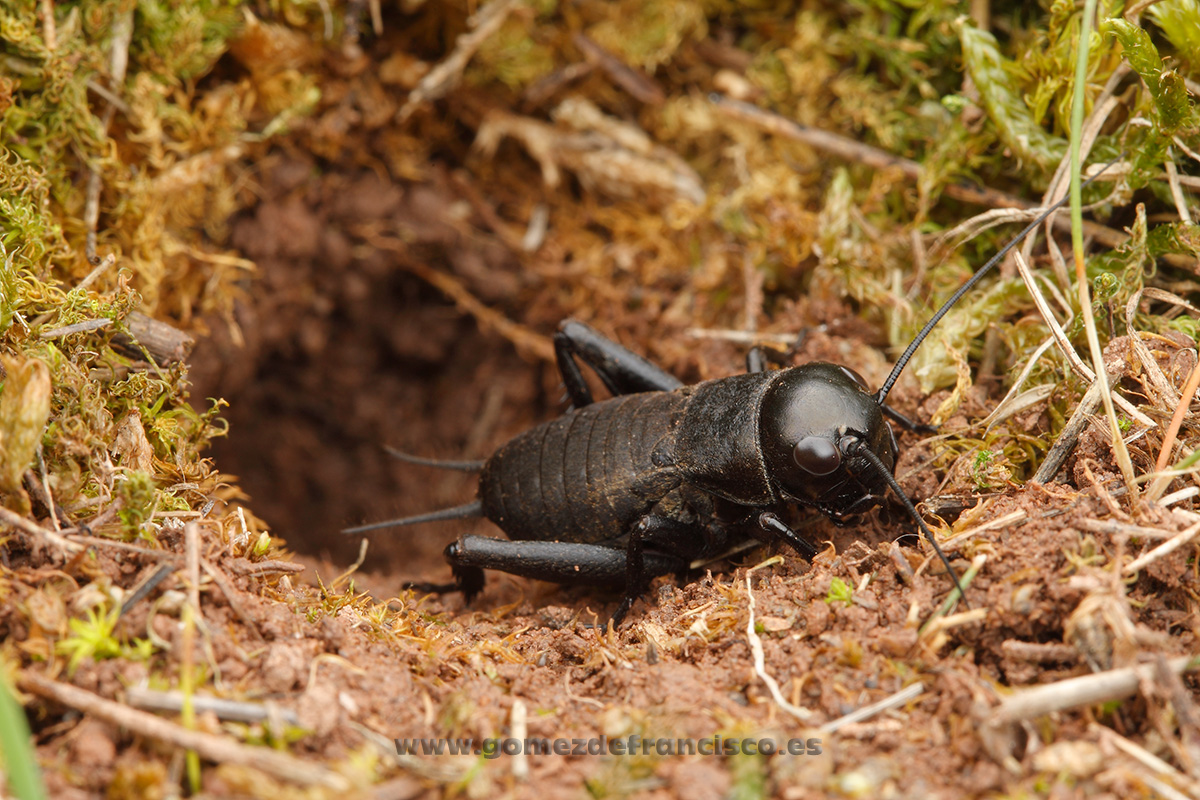 Mundos pequeños - J L Gómez de Francisco. Fotografía macro de la naturaleza - Macro Photography in the wild