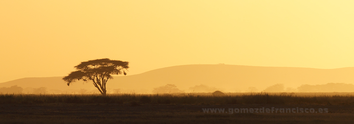 Atardecer en el Parque Nacional de Amboseli (Kenia) - Panorámicas - J L Gómez de Francisco. Fotografía panorámica de paisaje - Panoramic pictures