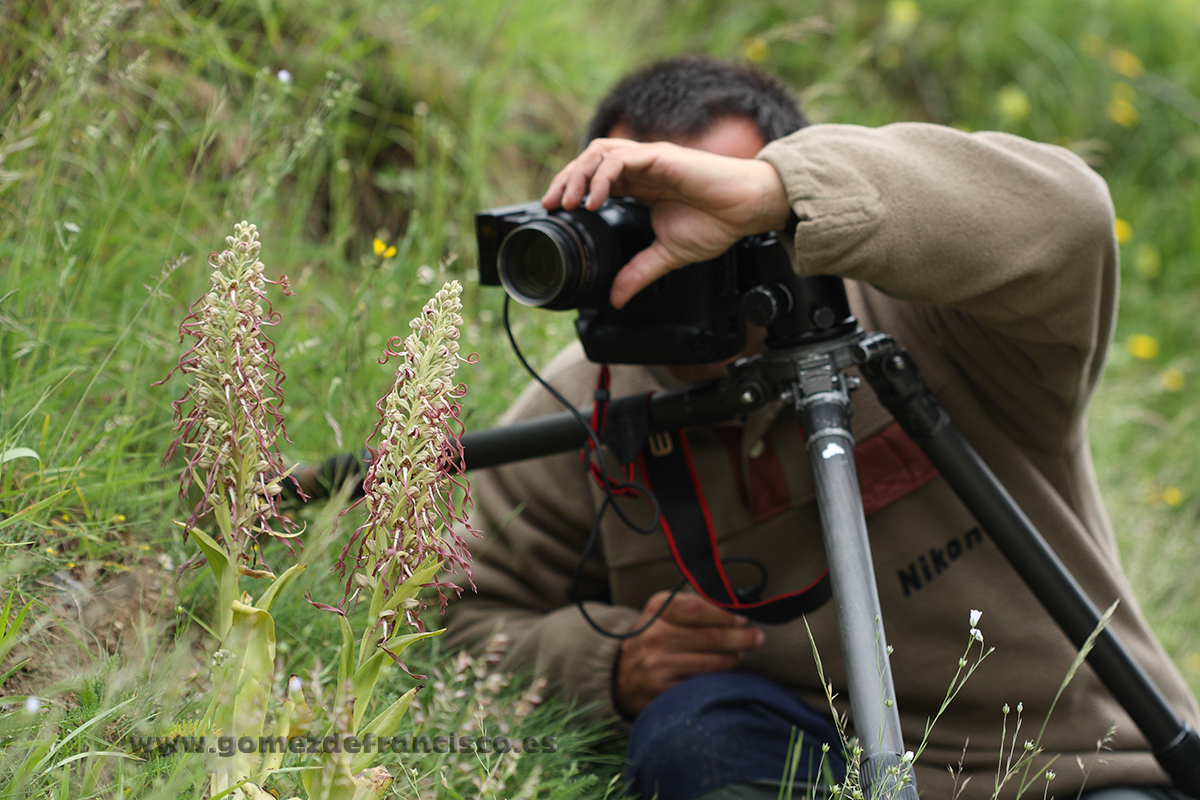 Fotografiando orquídea Himantoglossum hircinum. España - Making of - J L Gómez de Francisco. Fotografía de making of - Making of