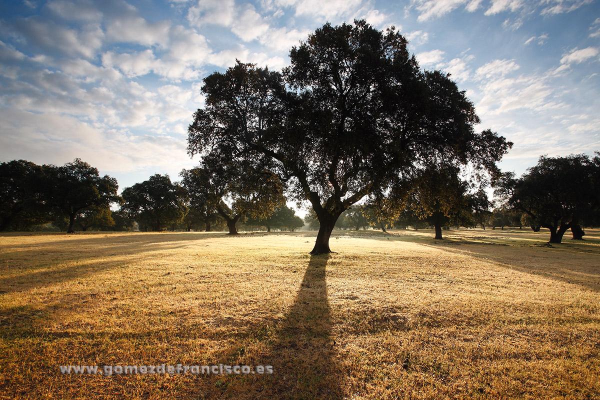 Amanecer en el Parque Nacional de Monfragüe (Cáceres) - España - J L Gómez de Francisco. Fotografía de paisaje de España - Spanish landscape