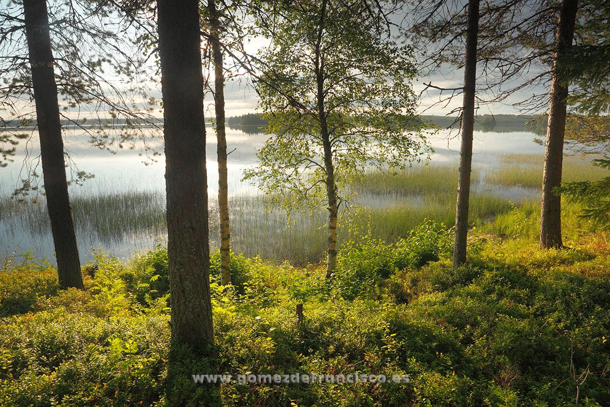 Ranua, Finlandia - Escandinavia - J L Gómez de Francisco. Fotografía de paisaje de Escandinavia - Landscapes from Scandinavia