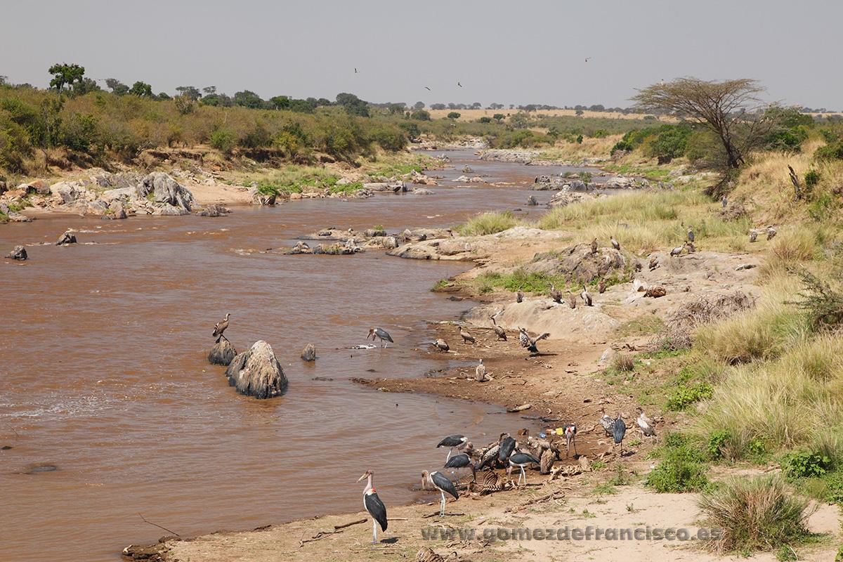 Masai Mara, Kenia - África - J L Gómez de Francisco. Fotografía de paisaje de África - Landscapes from Africa