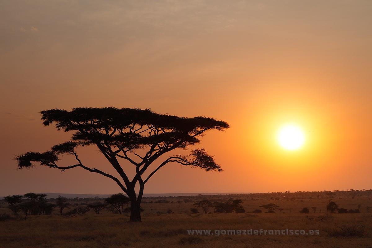 Amanecer en Seronera, Parque Nacional de Serengueti, Tanzania - África - J L Gómez de Francisco. Fotografía de paisaje de África - Landscapes from Africa