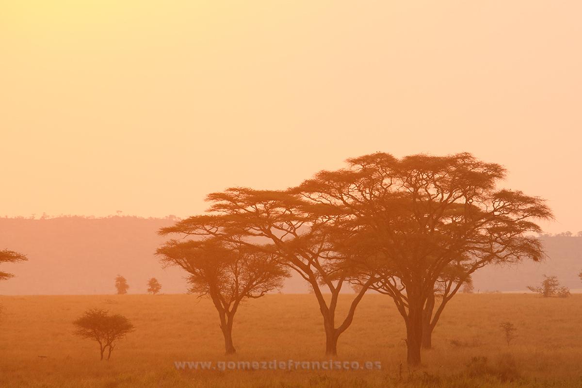 Atardecer en Seronera, Parque Nacional de Serengueti, Tanzania - África - J L Gómez de Francisco. Fotografía de paisaje de África - Landscapes from Africa