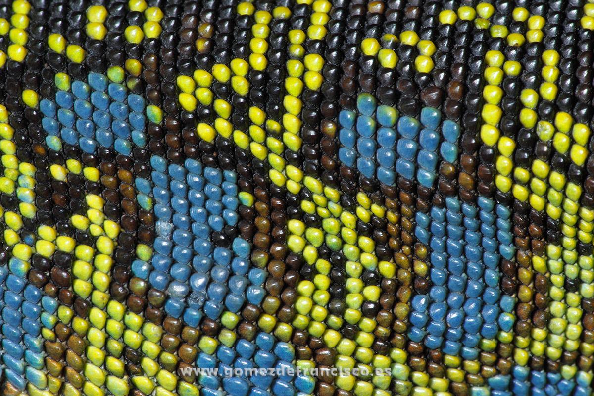 Detalle de un lagarto ocelado (Timon lepidus). La Rioja - Atención al detalle - J L Gómez de Francisco. Fotografía de detalles de la naturaleza - Photography of patterns in nature