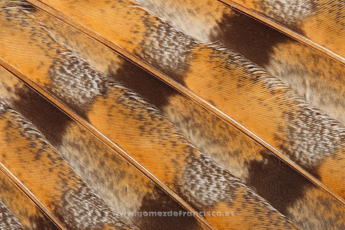 Detalle de ala de lechuza blanca (Tyto alba) - Atención al detalle - J L Gómez de Francisco. Fotografía de detalles de la naturaleza - Photography of patterns in nature